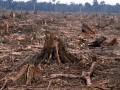 На Харьковщине из-за незаконной вырубки леса под суд пойдут 15 человек