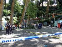 На острове Мадейра упало огромное дерево: погибли 11 человек