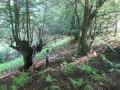 На Закарпатье браконьер выстрелил в мальчика, собиравшего грибы