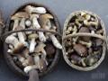 В Одесской области семья отравилась грибами, беременная мать и сын скончались