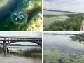Эксперты взволнованы из-за медуз и рыб-игл в Киевском водохранилище