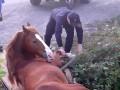 В Ужгороде конь застрял в трехметровой
