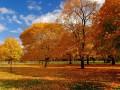 В ноябре в Украине сохранится плюсовая температура