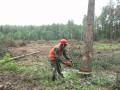 Свершилось: В Украине запретят вырубку леса