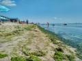 Побережье Азовского моря превратилось в болото