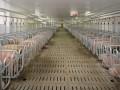 ВТО признала незаконным запрет России на ввоз свинины из ЕС