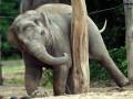 В Марокко слониха убила ребенка