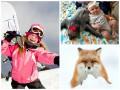 Позитив дня: дружба малышки и ленивца, и снег в Киеве