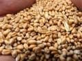 Украина в январе увеличила экспорт зерновых в Египет почти в 25 раз