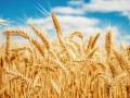 В Украине могут снизить ставку НДС для аграриев до 14%: Подробности