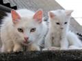 В Николаеве бездомным кошкам дали официальный статус