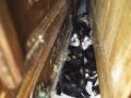 В квартире в Париже полиция обнаружила 130 кошек