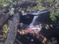 На Парковой дороге в Киеве дерево повредило два автомобиля, стоявших в пробке