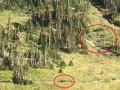 В США побег туристов от медведя попал на видео