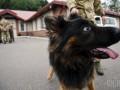 Украинские пограничные собаки напали на наблюдателей ОБСЕ