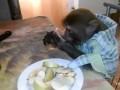 Россиянин научил обезьяну пить водку залпом и закусывать