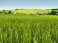 Рынок земли: Ограничение 10 тыс га не будет распространяться на банки