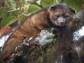 Животные недели: медведь-кошка  и собака на скейте (ФОТО)