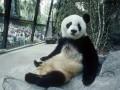 Животные недели: удивленная панда и очаровательный кинг-конг