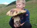 На Закарпатье нашли гриб-гигант
