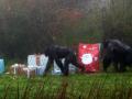 В Великобритании обитателям зоопарка вручили подарки от Санты