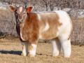 Пушистая корова и довольный бегемот: животные недели (ФОТО)