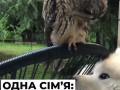 На видео показали, как на Закарпатье сова подружилась с собакой