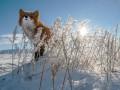 Прогноз погоды на неделю: в Украину идет похолодание до -20