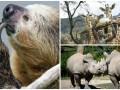 Животные недели: размышления ленивца, осиротевшие жирафы и целующиеся носороги