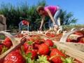 В Польше улучшили условия для сезонных работников