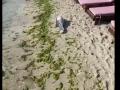 На одесском пляже у Delfi обнаружили мертвого дельфина