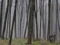 В Закарпатье на территории элитного охотничьего клуба произошел масштабный пожар