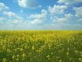 Красивая Украина: лучшие ФОТО читателей bigmir)net