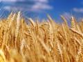 В Минэкономразвития рассказали, как будут решать проблемы экспорта сельхозпродукции