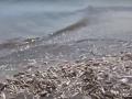 В Мариуполе пляж покрылся мертвой рыбой