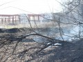 В Запорожье возле парка возник пожар