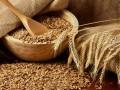 Украина ожидает рекорд по заготовке зерновых