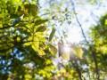 Синоптики: C сегодняшнего дня жара в Украине немного ослабнет