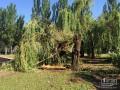 В Кривом Роге ураган повалил более 150 деревьев: Повреждены 76 авто