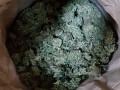 Урожай на 39 миллионов: на Закарпатье задержали фермера с марихуаной