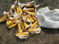 Комичный побег горе-похитителя кукурузы заснял дрон