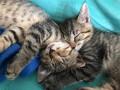 Кото-терапия: В столице впервые пройдет ярмарка котов