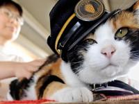Google посвятил дудл кошке - начальнице ж/д станции в Японии