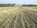 Количество зарегистрированных в Украине земельных участков достигло миллиона