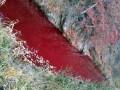Река в Южной Корее окрасилась кровью больных свиней