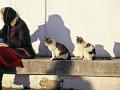 В Киеве спасены два кота