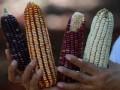 Цены на кукурузу установили новый рекорд