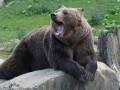 Медведь напал на женщину под Харьковом