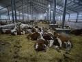 Более ста агропредприятий рассчитывают продать за миллиард гривен