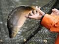 В России научились делать мармелад из рыбной  чешуи